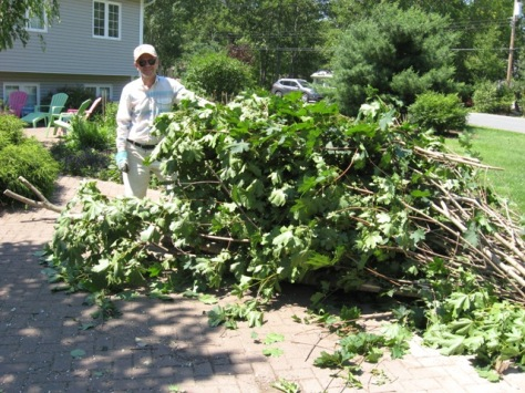 Ron had to clean up all the branches and mess from Hurricane Arthur.